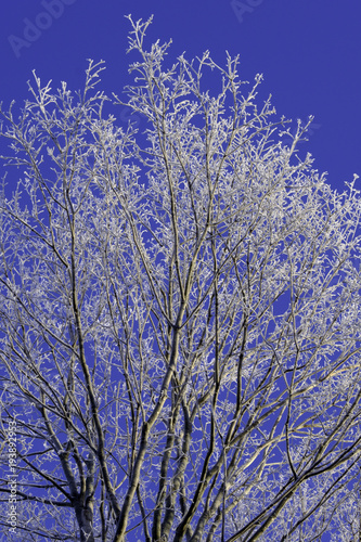 Plexiglas Lavendel winter trees