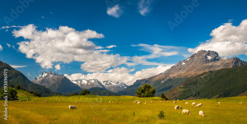 Fototapeta Beautiful Pastoral Alpine Landscape in New Zealand with snow-capped mountains and meadows with sheep.
