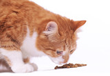 Red cat eats food on white background