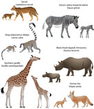 Collection of animals with cubs living in the territory of Africa: northern giraffe, black rhinoceros, Grevy's zebra, ring-tailed lemur, fennec fox, serval - 193910178