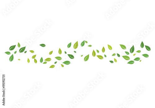 zielony liść ekologia natura