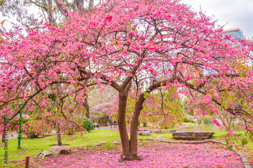 Aluminium Buenos Aires Azale a Tree at Japanese Garden of Buenos Aires, Argentina