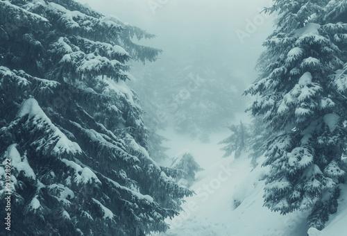 Aluminium Winterlandschap Winter forest Instagram filter