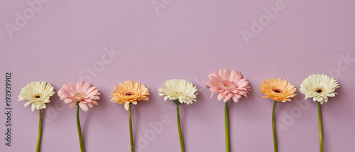 Fotobehang Gerbera Spring composition from fresh fragrant gerberas on a pink paper background