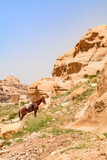 The covered horse resting on a sandstone cliff. - 193942971