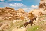 Horse in Petra - Jordan - 193942985