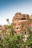 Vegetation of Petra - 193943116