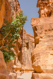 the siq canyon. Petra, Jordan country - 193943359
