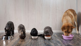 Many cats and dogs eat pet food from bowls - 193948527