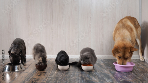 Fotobehang Kat Many cats and dogs eat pet food from bowls