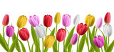Colorful realisic tulip flowers with leaves. Vector illustration, isolated on white for horizontal spring banner and nature design - 193958787