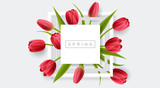 Fototapeta Tulipany - White frame with red tulip flower and green leaf. Realistic vector illustration for spring and nature design, banner with square frame © schondrienn