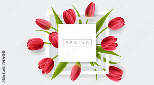 Fridge magnet White frame with red tulip flower and green leaf. Realistic vector illustration for spring and nature design, banner with square frame