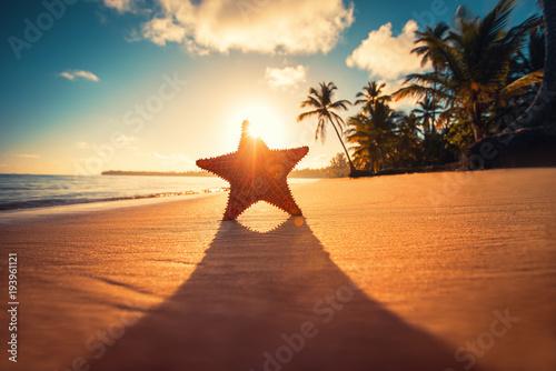 Seastar or sea starfish standing on the beach.