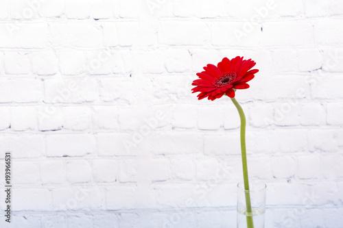 Plexiglas Gerbera Red gerbera daisy