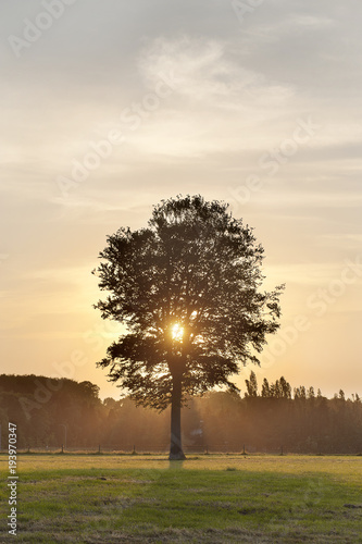 Tuinposter Beige Last sunbeams coming through treebranches in the countryside between Ruiselede and Maria-Aalter