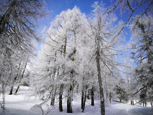Lärchenwald Bäume Raureif