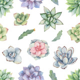 Watercolor vector seamless pattern of cacti and succulent plants isolated on white background. - 193980560