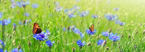 Makro- strzał na dwa motylach i kwiatach.