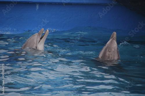 Fotobehang Dolfijn Delfines