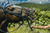 Equine in muzzle on pasture on sunny summer day - 194017127