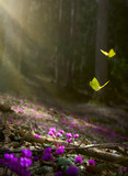 Easter spring flower background; fresh flower and yellow butterfly on spring forest background - 194019957