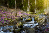 blooming spring forest; Mountain stream and spring flowers - 194021154