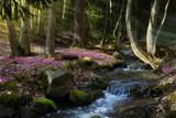 blooming spring forest; Mountain stream and spring flowers - 194021158