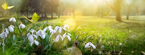 wielkanocny-wiosna-kwiatu-tlo-swiezy-kwiat-i-zolty
