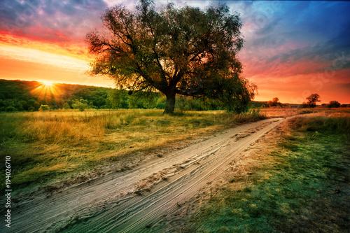 Aluminium Lente Sandy road next to tree under setting orange sky