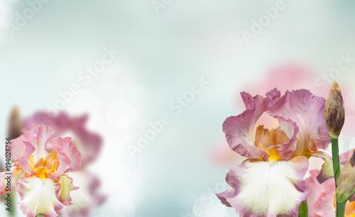 Fotobehang Iris Booming irises
