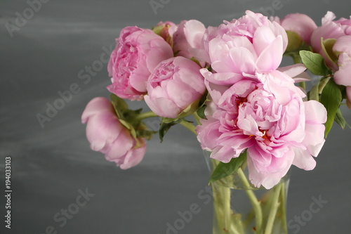 Pink peony flowers with leaves on gray background.