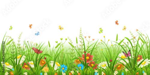 Fototapeta Meadow green grass with flowers and butterflies