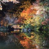 Night scene, illumination in Kenroku en garden in Kanazawa  Japan - 194049930