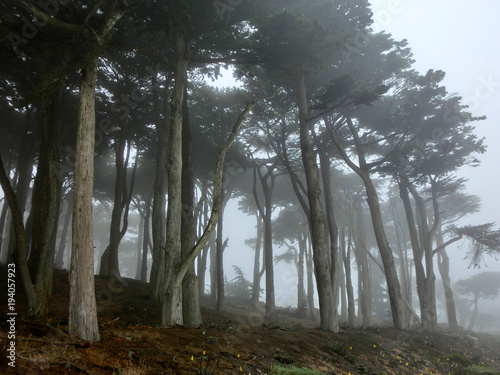Fotobehang Betoverde Bos Enchanted foggy forest with spooky trees black and white