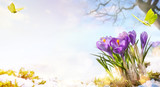 spring flowers and flight butterfly on spring meadow background; - 194074967