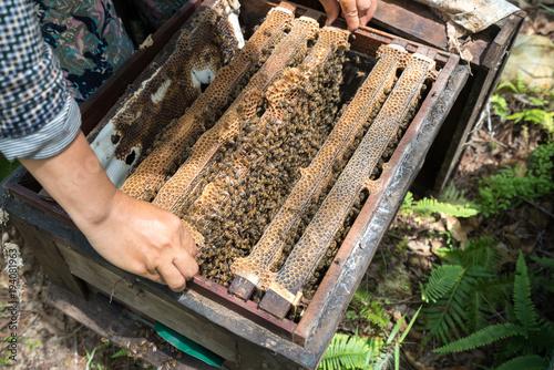 Fotobehang Bee Human kept beehive closeup with man hands. Collecting honey from bee nest