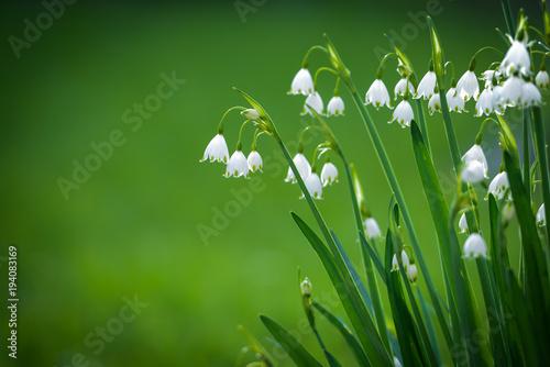 Frühlingsblumen - 194083169