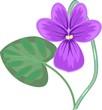 Violet flower with green leaf