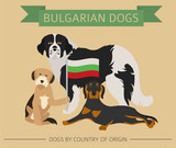 Dogs By Country Of Origin Bulgarian Dog Breeds Infographic Template Wall Sticker