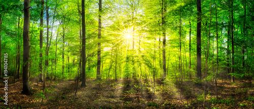 Keuken foto achterwand Lime groen Grünes Waldpanorama im Sonnenlicht