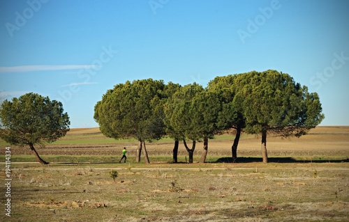 Fotobehang Blauw View of trees