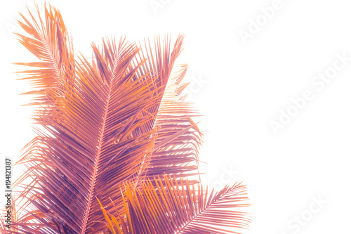 Fotobehang Purper Toned palm leaves silhouette on white background. Lighting filter effect, purple and orange colors. Copy space