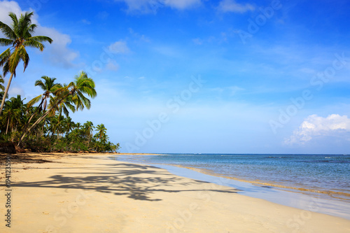 Drzewka palmowe na białej tropikalnej plaży