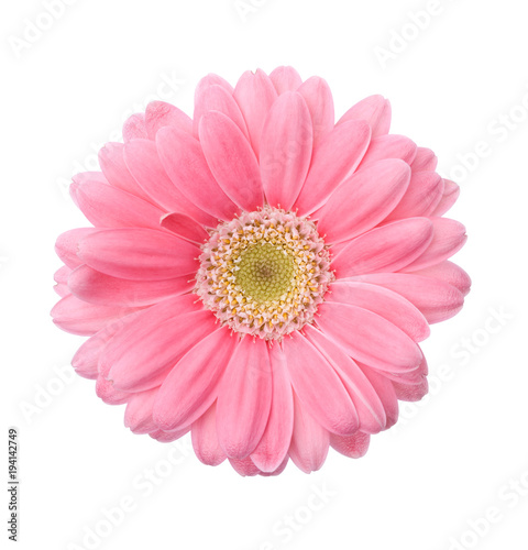 Fotobehang Gerbera Pink Gerber daisy isolated on white