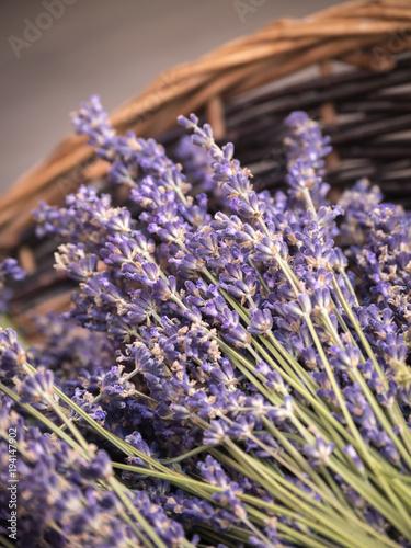 In de dag Lavendel Lavender in a basket Sault Vaucluse Provence-Alpes-Côte d'Azur France