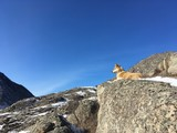 собака лежит на вершине горы - 194150774