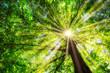Quadro Grüner Baum im Frühling mit Sonne im Gegenlicht