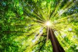 Grüner Baum im Frühling mit Sonne im Gegenlicht