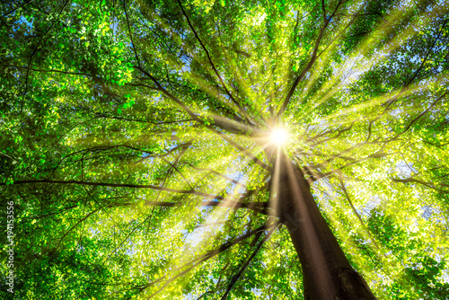 Leinwandbild Motiv Grüner Baum im Frühling mit Sonne im Gegenlicht